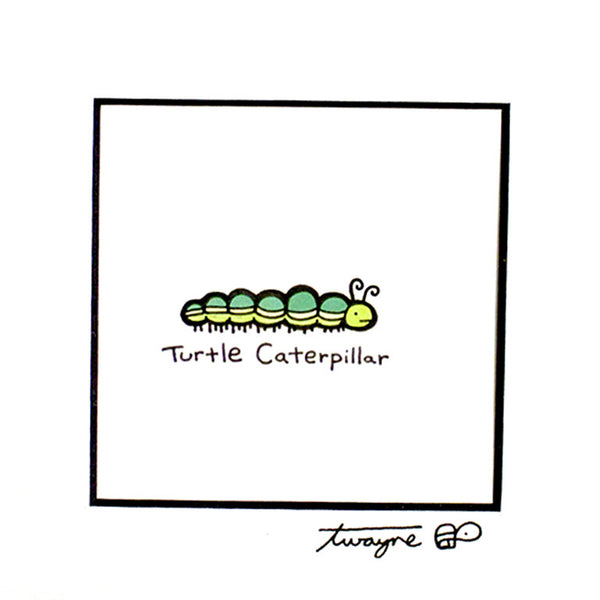 Turtle Caterpillar