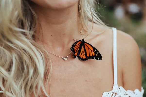 Behind the Scenes: Our Shoot with Monarch Butterflies