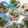 Corporate Terrarium Workshop - Open Terrarium Type C
