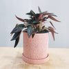 Classic Speckled Pink Pot (2 sizes available)