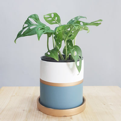 Classic Stripe Blue Grey Pot (3 sizes available)
