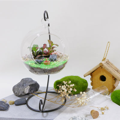 terrarium diy kit singapore