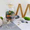 diy kit terrarium singapore