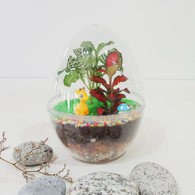 Kids Closed Terrarium (Egg Acrylic) DIY Kit