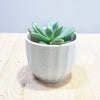 Origami Pot Small (4 colors available)
