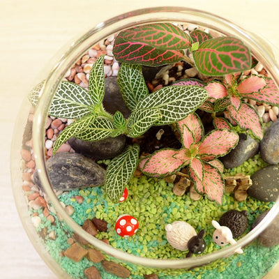 Corporate Terrarium Workshop - Closed Terrarium Type B