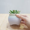 Zen Speckled Pot Extra Small (4 colors available)