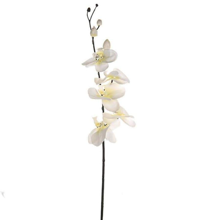 CB Imports Black and White Orchid