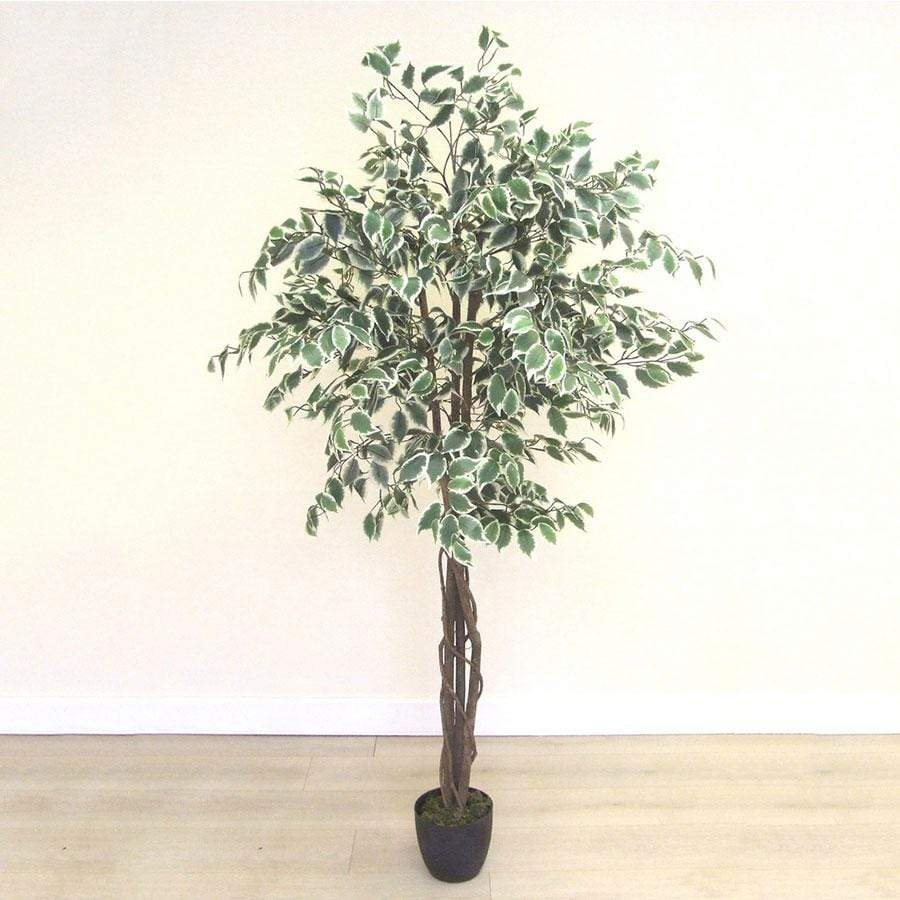 Florelle Artificial 6ft Variegated Ficus Tree in Pot