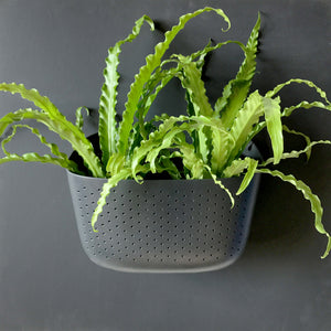 Wally Eco Charcoal Wall Planter (US Customers)