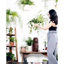 Load image into Gallery viewer, Wally Eco White Wall Planter