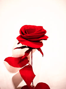 rose, long stemmed rose, red rose, rose bouquet, art, gift