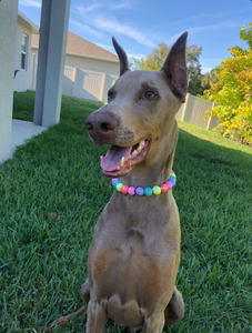 Electric Rainbow Bead Collar