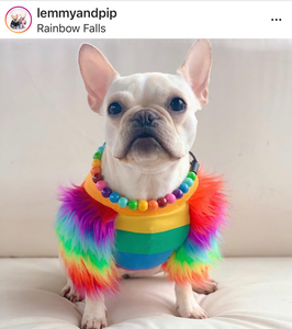 Rainbow MINI Wooden [Small Dog/Cat Bead Collar]