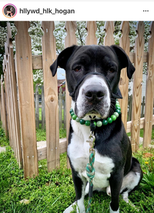 Green Gradient MINI Wooden [Small Dog/Cat Bead Collar]