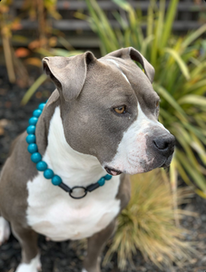 Paradise Blue Wooden Bead Collar