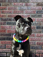Load image into Gallery viewer, Tropical Rainbow Wooden Bead Collar
