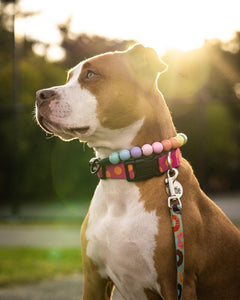 Pastel Rainbow Wooden Bead Collar