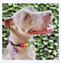 Load image into Gallery viewer, Rainbow Flash Metallic Wooden Bead Collar