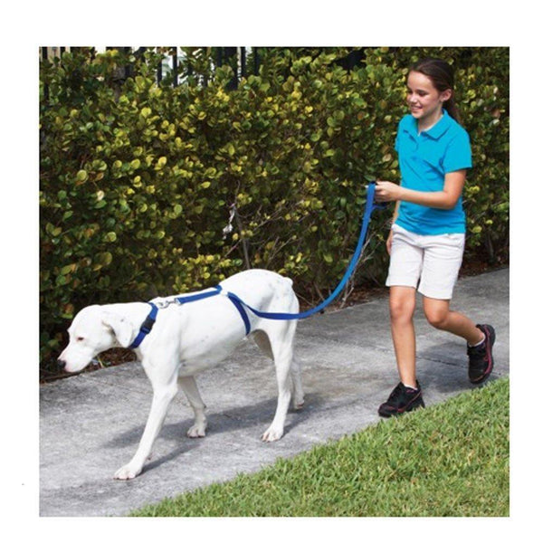 Instant dog trainer leash - kassouanet