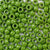 olive green 6 x 9mm plastic pony beads in bulk