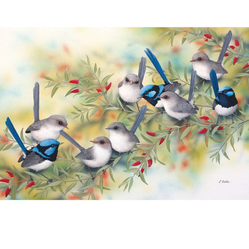 Card Blue Wrens on Swan River Pea