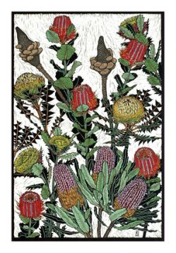 Card Banksias and Dryandra