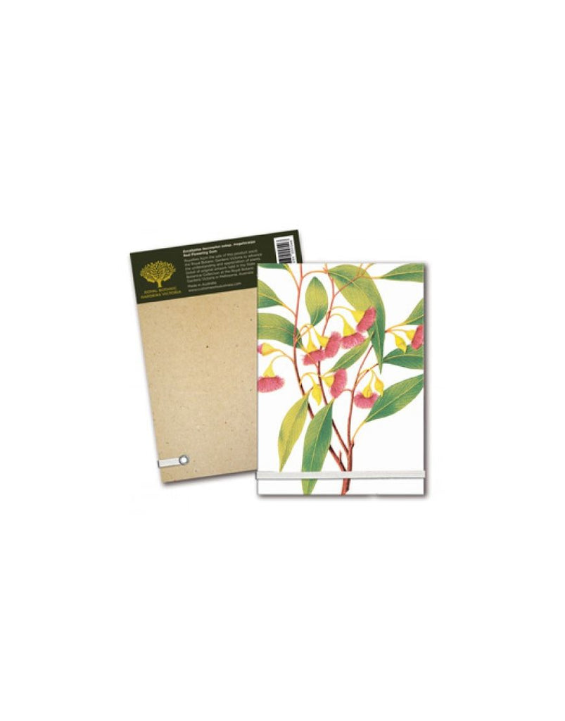 Notepad A6 Red Flowering Gum