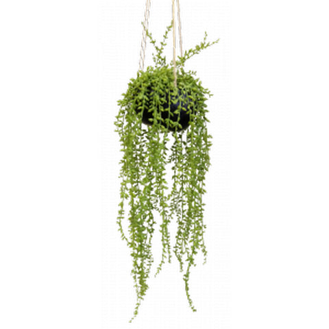 AF Foliage Hanging String Of Pearls