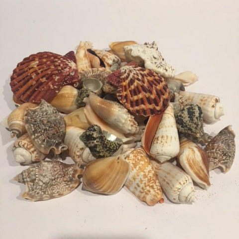 Shells - Coloured Mix