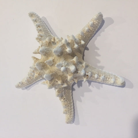 Starfish - Cream Knoby