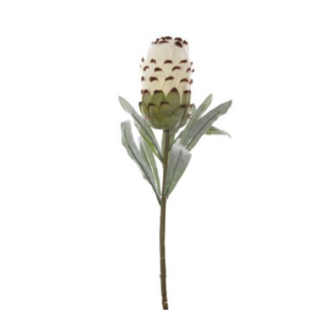 AF Australian Native Protea Cream