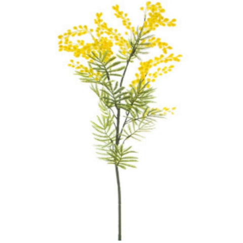 AF Australian Native Wattle Supreme Yellow
