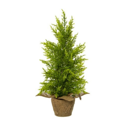 Tree KO Cypress Pine Christmas Tree Potted