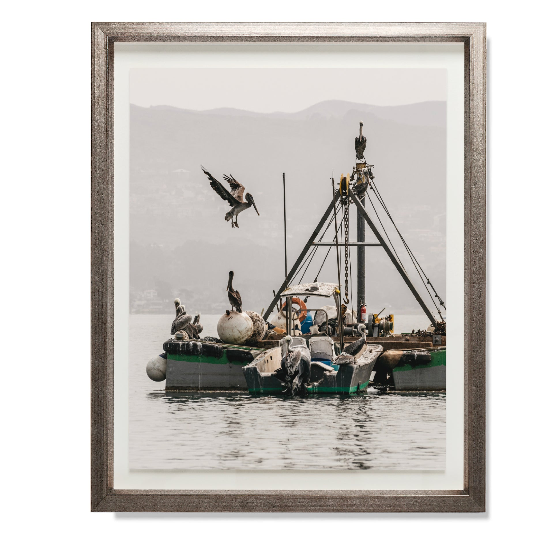 Fishing Pelicans