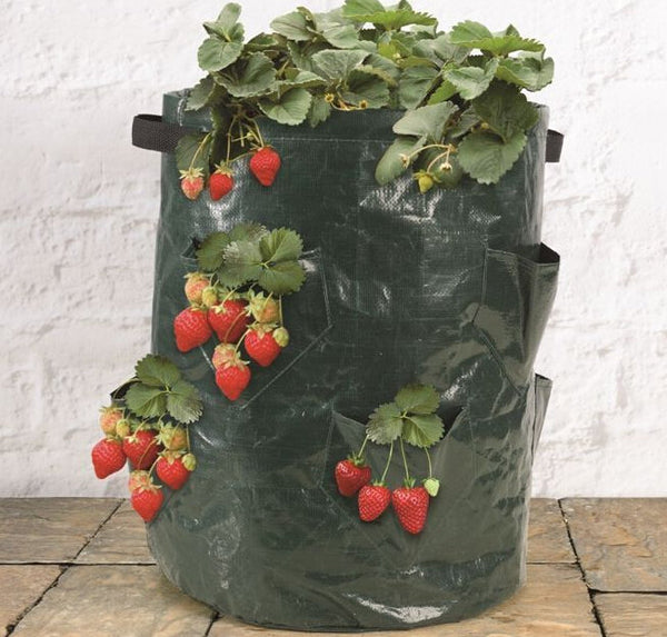 PE Multi-Pockets Strawberry Grow Bag