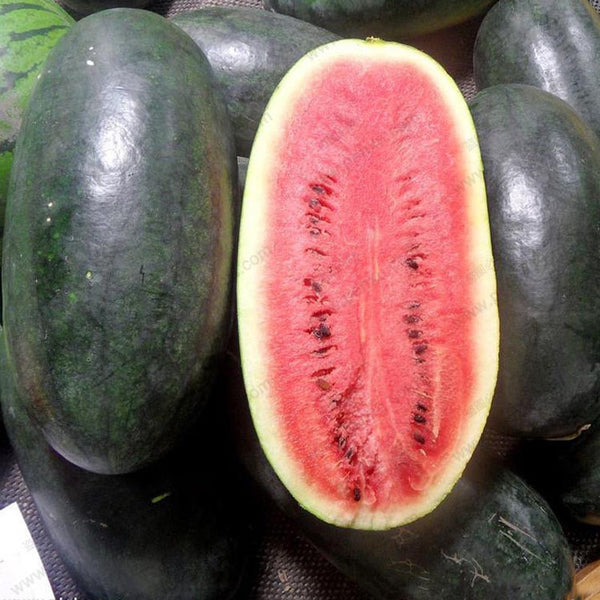 50Pcs Giant Watermelon Seeds Black Tyrant King Super Sweet Watermelon Seeds Garden Fruit