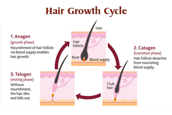 Understanding The Four Seasons of Hair Growth