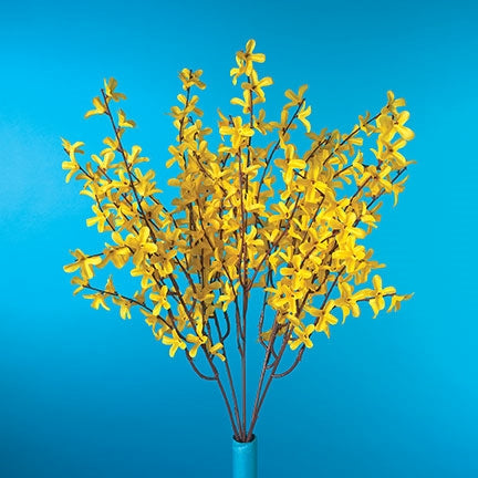 "20"" Forsythia Bush -  Displaying Late Season Blooms at 50% OFF - Ships in Quantities of Six"