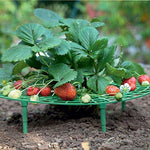 Growsun Strawberry Supports Keeping Fruit Elevated to Avoid Ground Rot,10 Pack