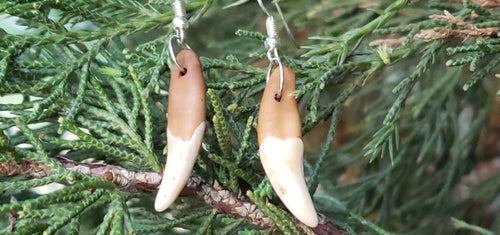 Coyote Tooth Drop Earrings Rustic Outdoors Jewelry Fang - North Rustic