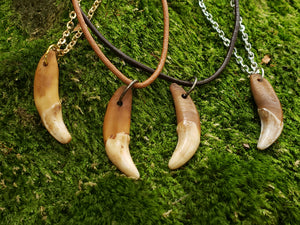 Coyote Tooth Necklace Antiqued Fang AQCN - North Rustic