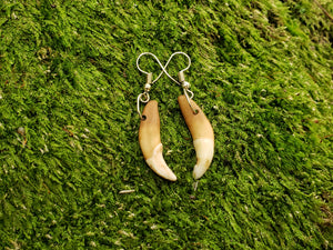 Coyote Tooth Drop Earrings Rustic Outdoors Jewelry (AQCE) - North Rustic