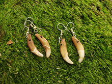 Load image into Gallery viewer, Coyote Tooth Drop Earrings Rustic Outdoors Jewelry (AQCE) - North Rustic