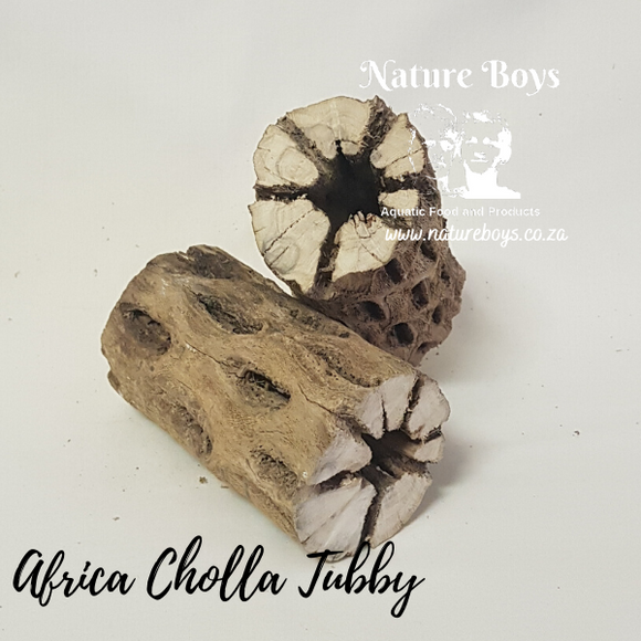 Nature Boys Afri Cholla 'Tubby'