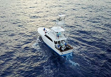 GHOF TEAM DIVES IN AND FILMS FREE SWIMMING PACIFIC BLUE MARLIN.