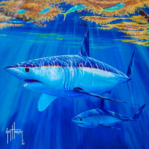GHRI RESEARCH MAKES WAVES IN MAKO SHARK PROTECTION