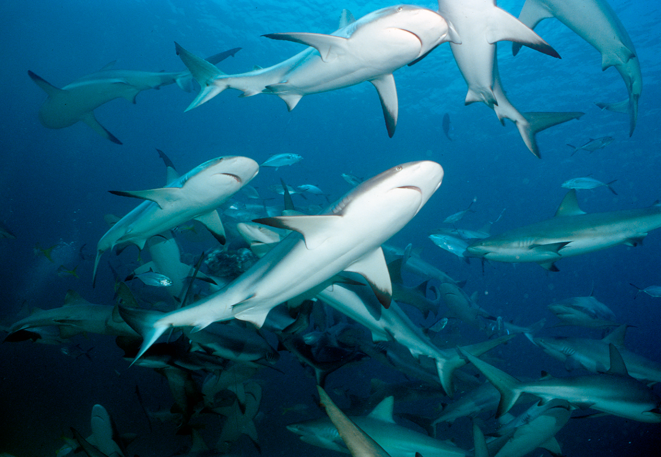 GHOF and Shark Allies Support Signing of Shark Fin Trade Legislation in Florida