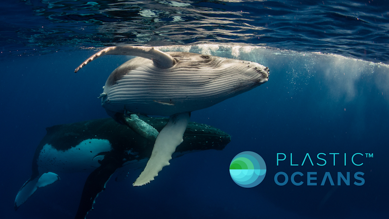 Introducing Our Partner: Plastic Oceans International