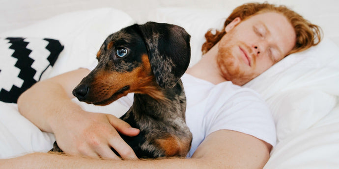 9 Science-Backed Benefits of Sleeping With a Dog